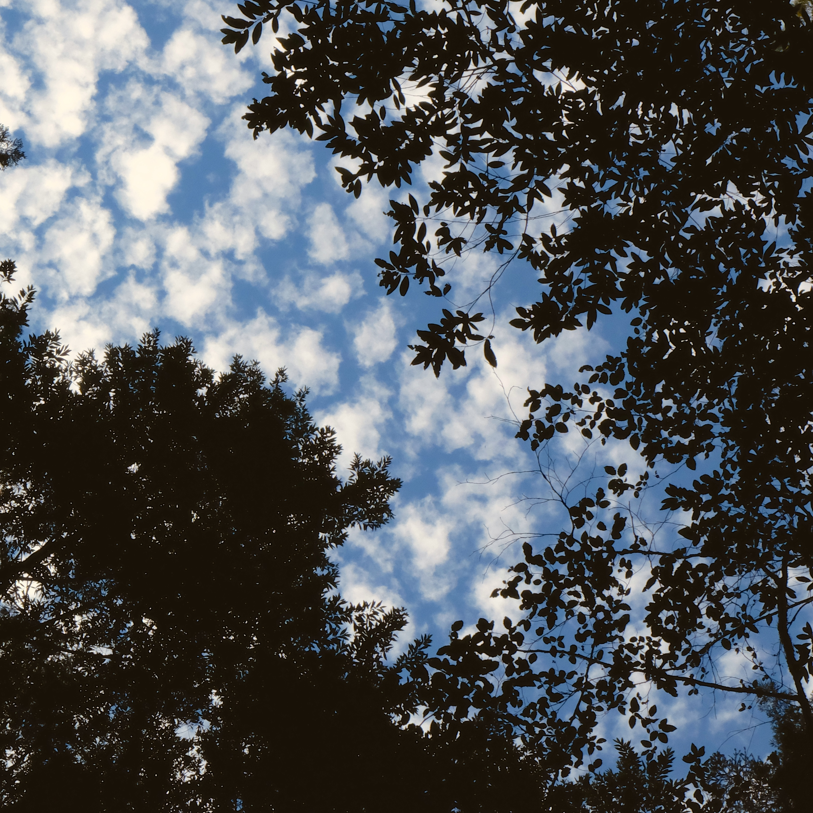 WITW15-TreeSky-Alla-DSCF1038